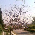 Quaid-i-Azam-University-Islamabad