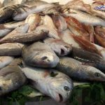 -fish-market